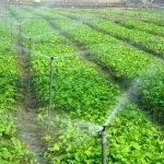 افتتاح ۵ طرح کشاورزی در شهرستان شهریار